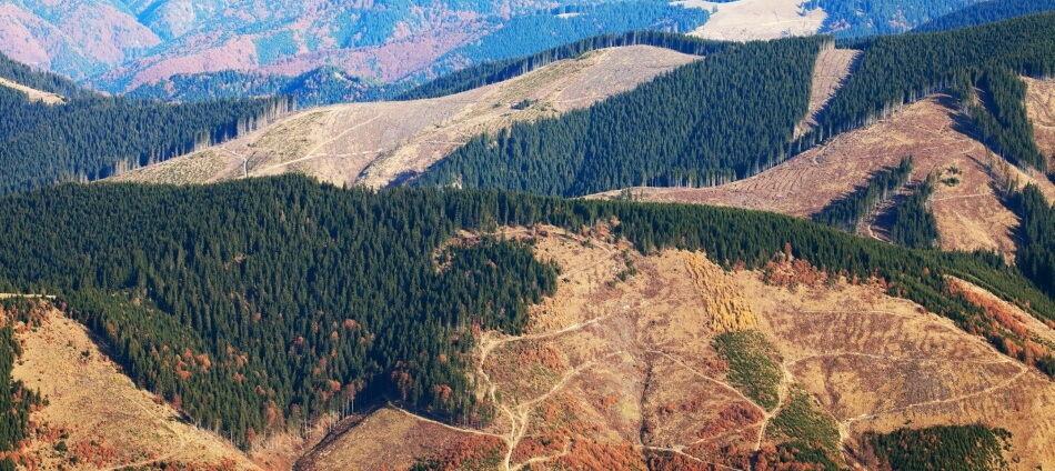 Вырубка леса в Карпатах: в сети показали яркое свидетельство последствий