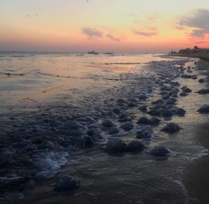 Гигантские медузы атаковали курорт Украины: фото