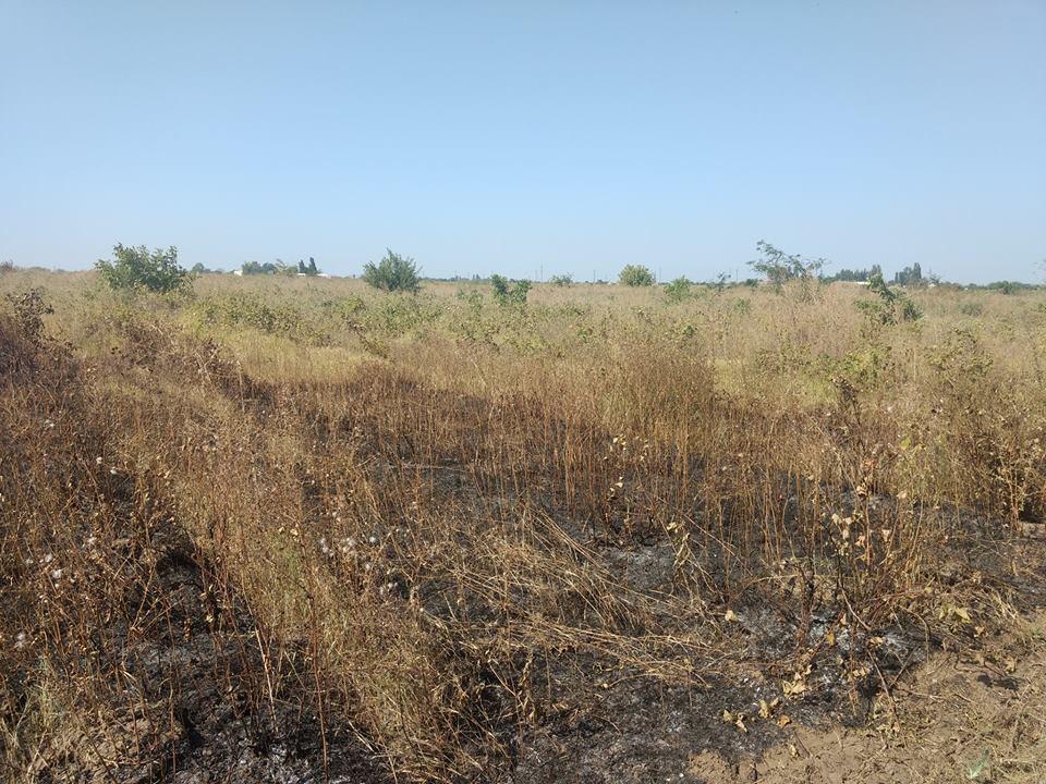Поджог виноградников под Одессой: все подробности