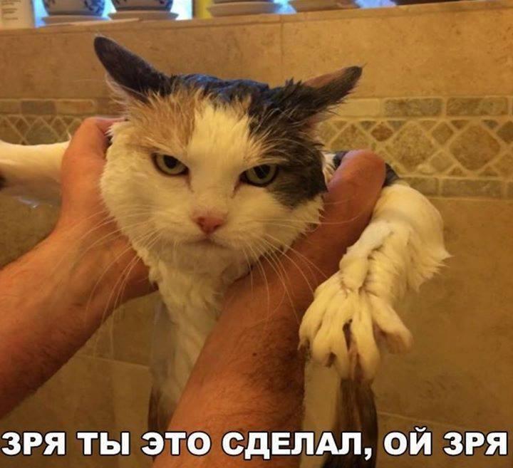 facebook.com/cherniy.yumor