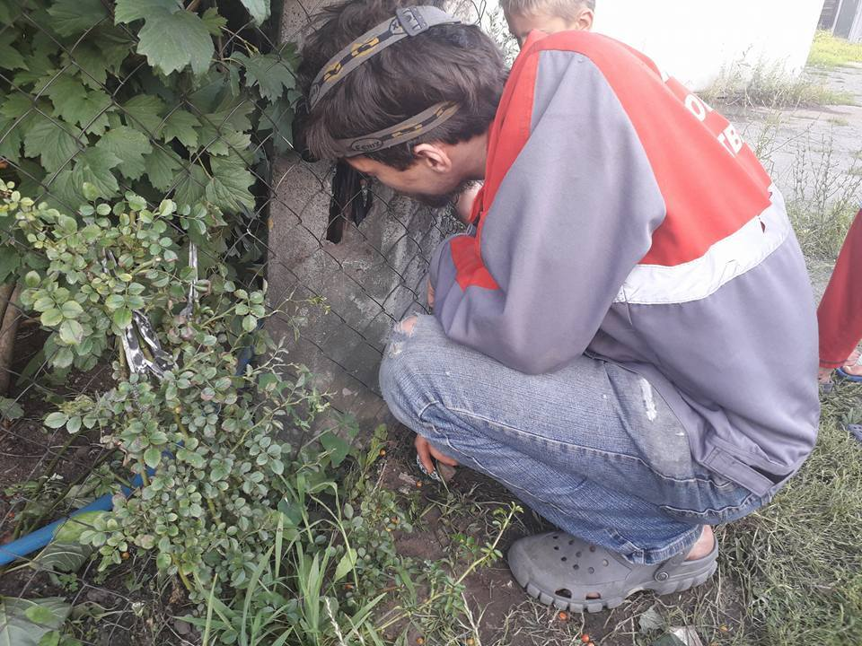 Отбойный молоток и снотворное: как в Киеве спасают животных