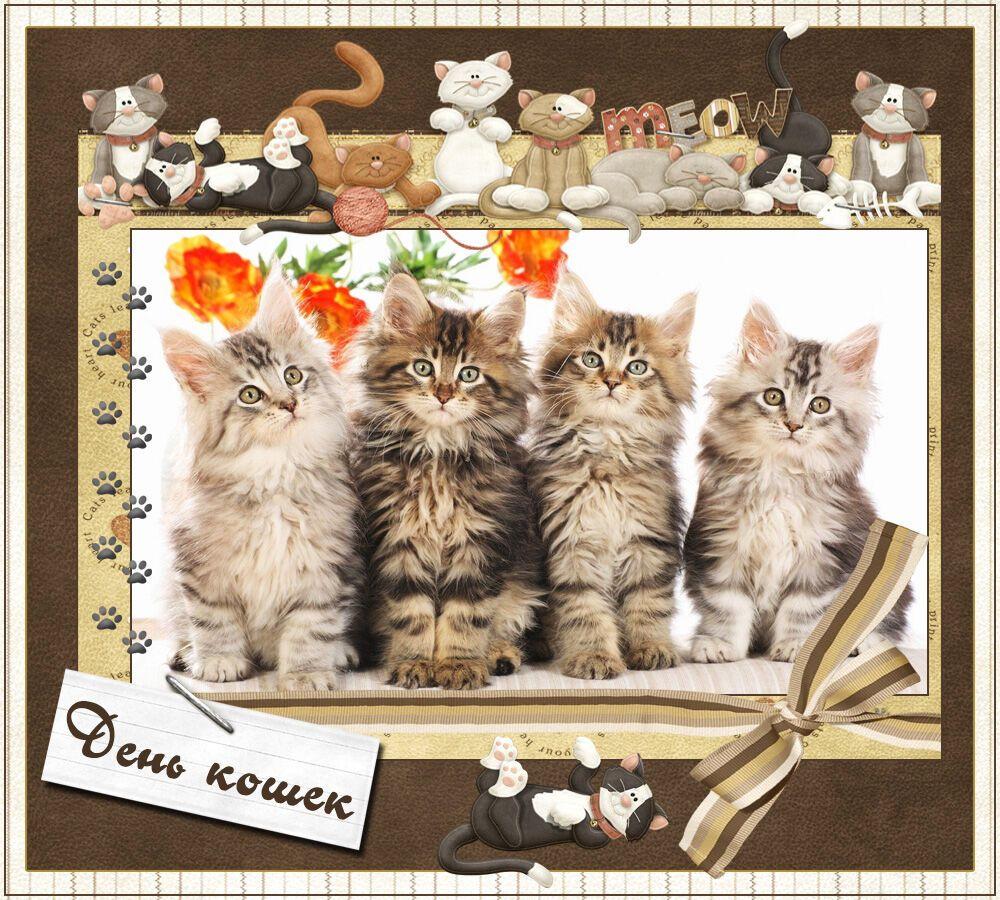 Открытки с днем кошек анимация, красивые