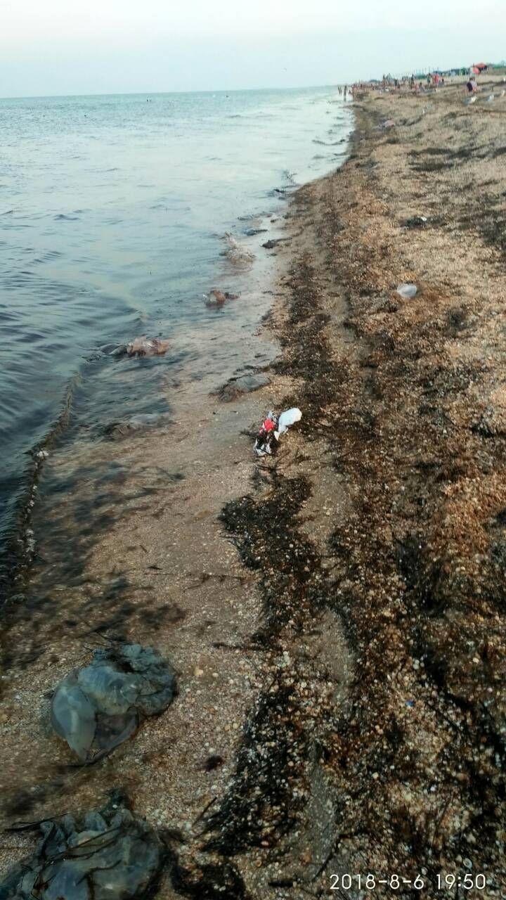 Водоросли и огромные медузы: появились новые фото с популярного в Украине пляжа