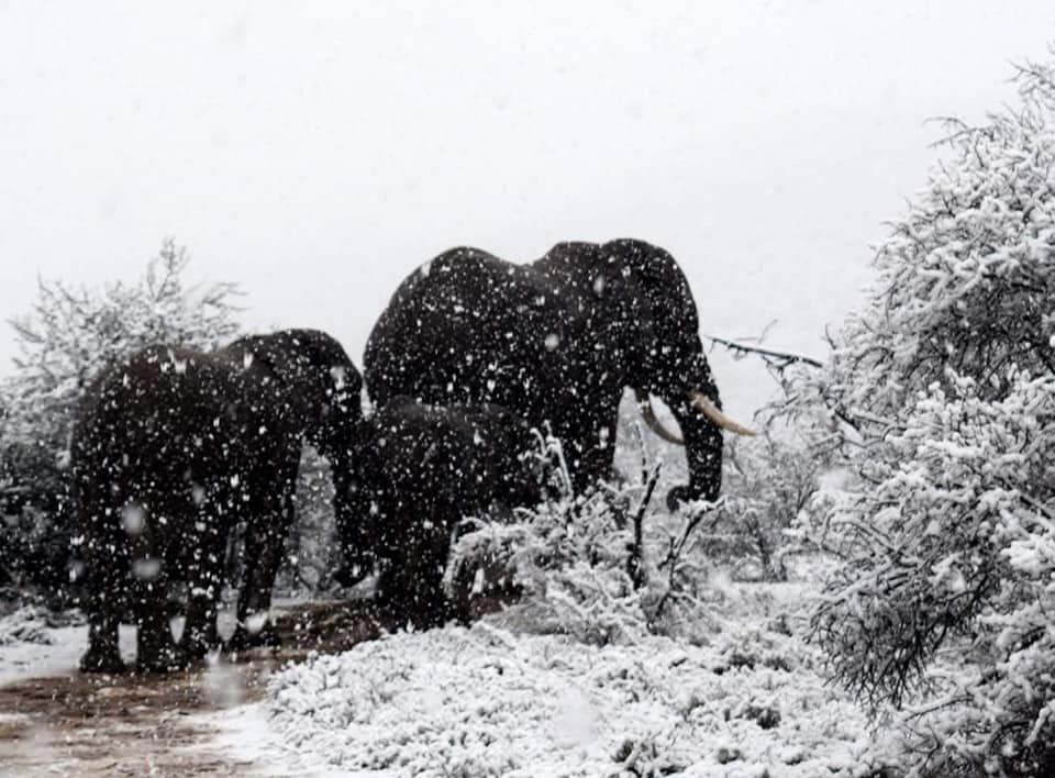 Появились новые фото и видео погодной аномалии в Африке