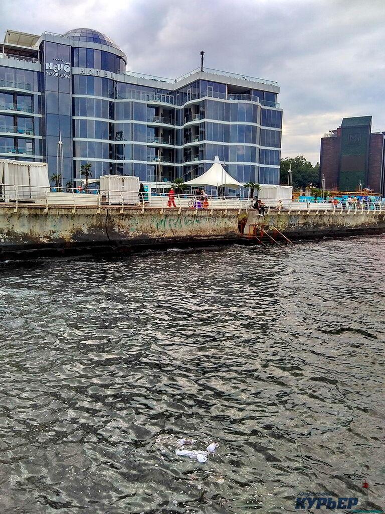 Пляж Одессы заполонили мертвые крысы. Фотофакт
