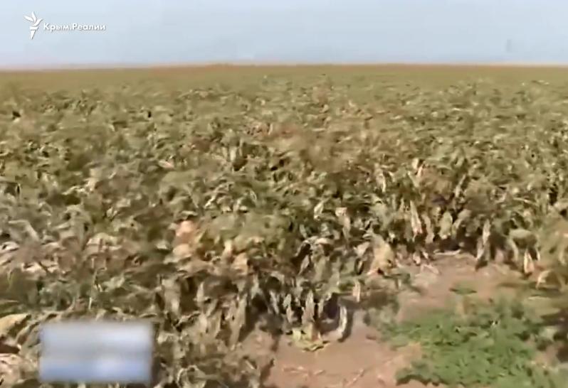 Опубликовано видео после ''химатаки'' в Армянске