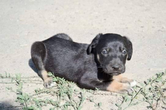 Друг безкоштовно: 4 собаки Дніпра, які шукають дім
