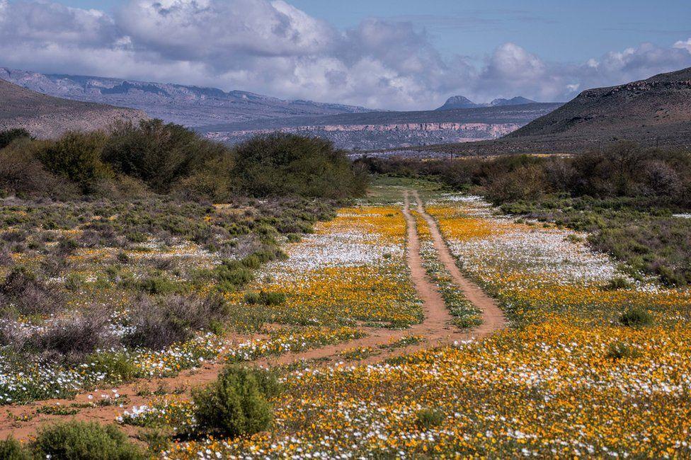 В Африке зацвела пустыня: опубликованы яркие фото