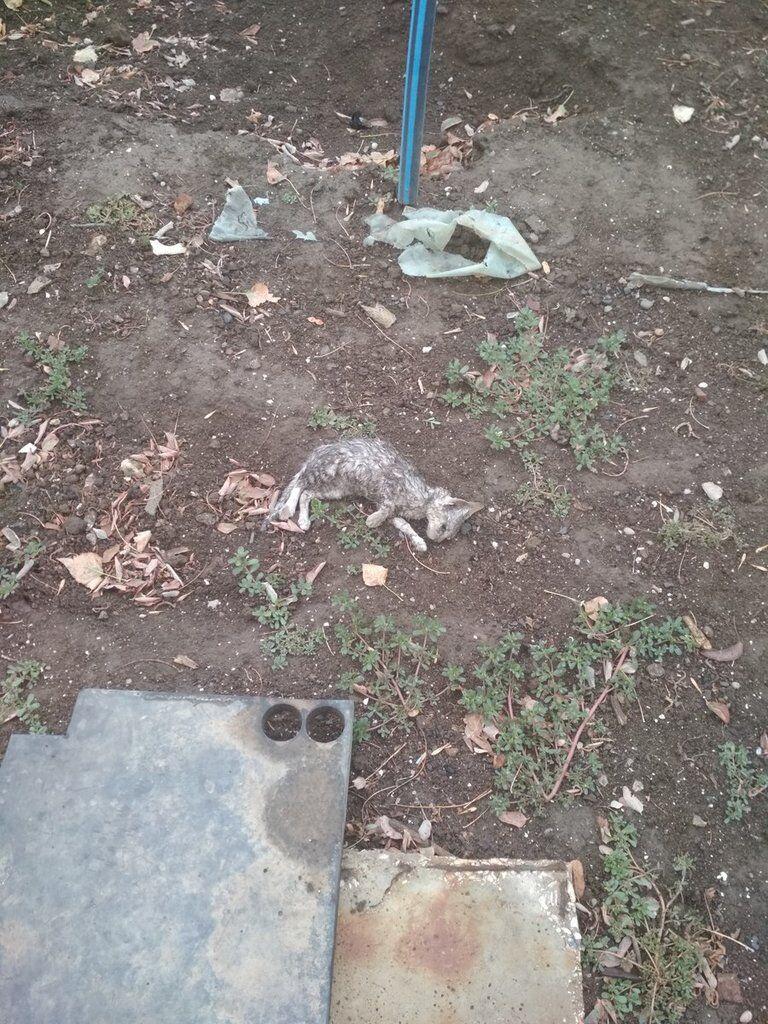 Котенок, погибший из-за выброса