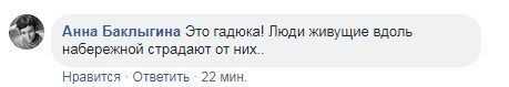 На вулиці Харкова помітили небезпечну змію: фото