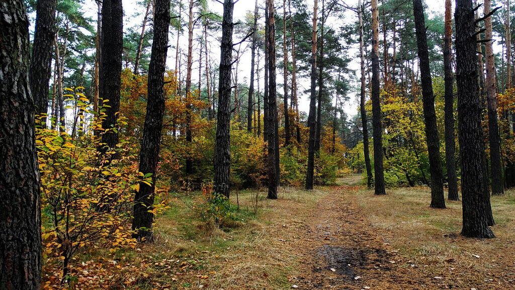 Куди піти погуляти восени? Найкрасивіші парки Києва