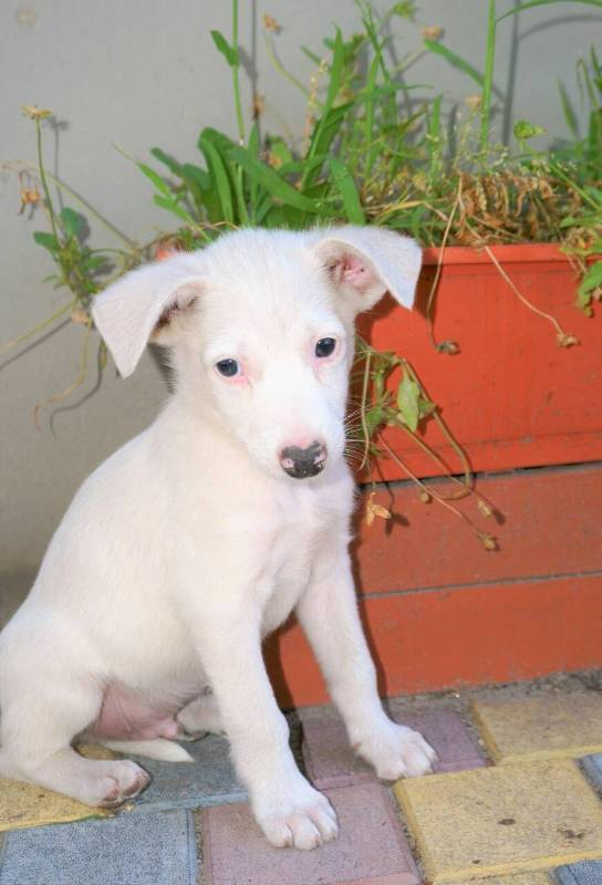 Друг бесплатно: 4 собаки Днепра, которые ищут дом