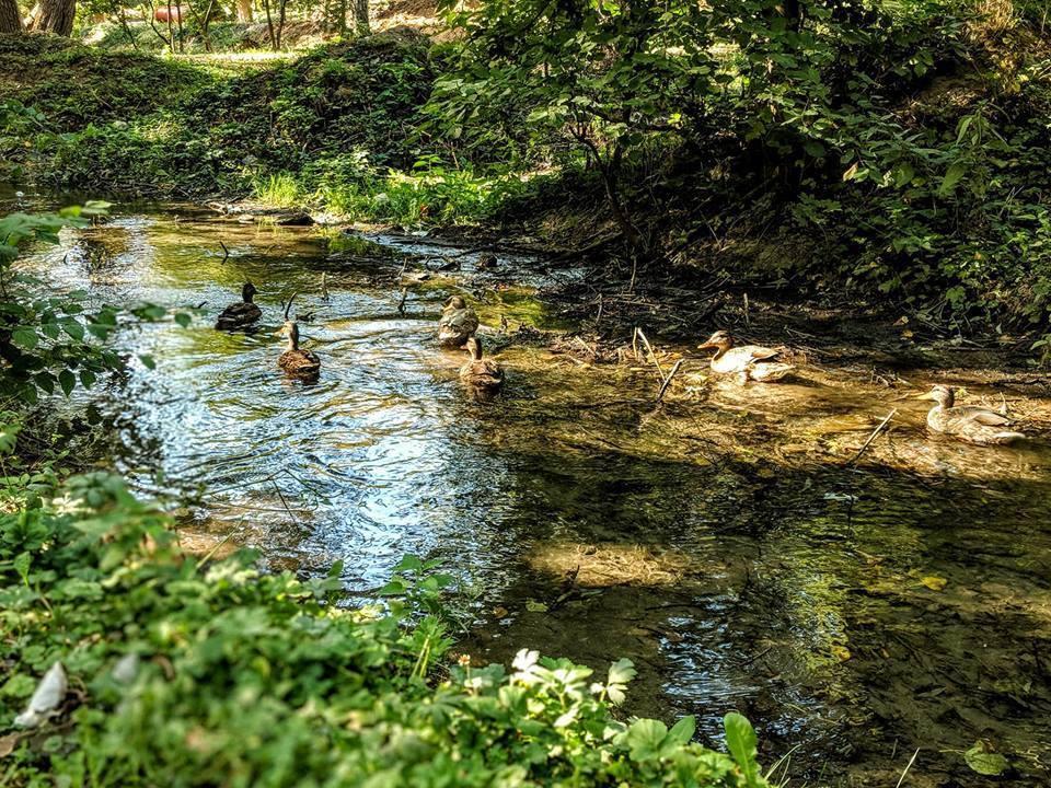 Заброшенные реки в городе: грусти пост