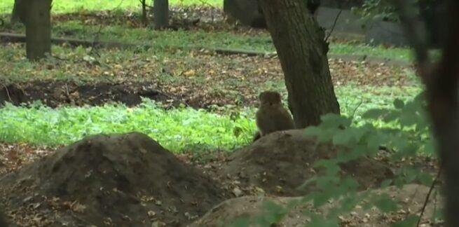 Із зоопарку Вінниці втекла мавпа: відео