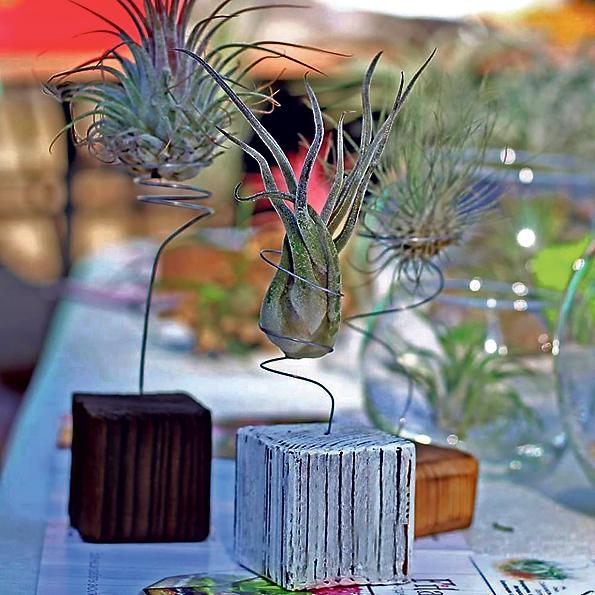 Екосистема в акваріумі: одеситка створює незвичайні витвори із квітів