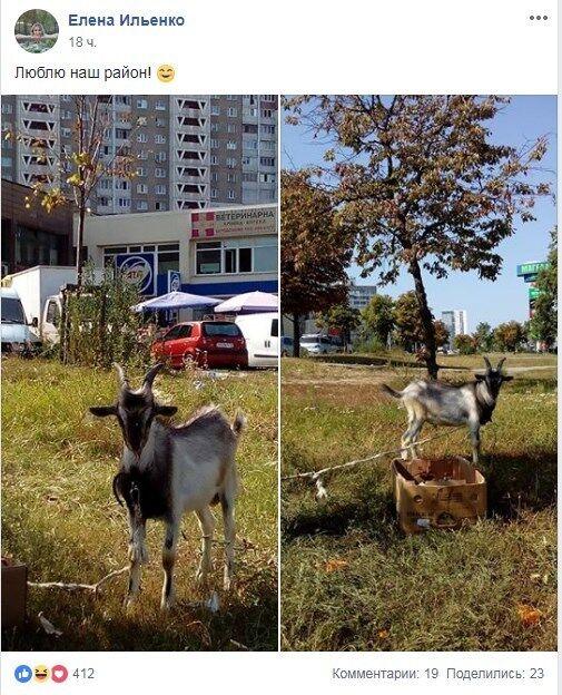 ''А де господар?'' В Києві помітили незвичайну тварину