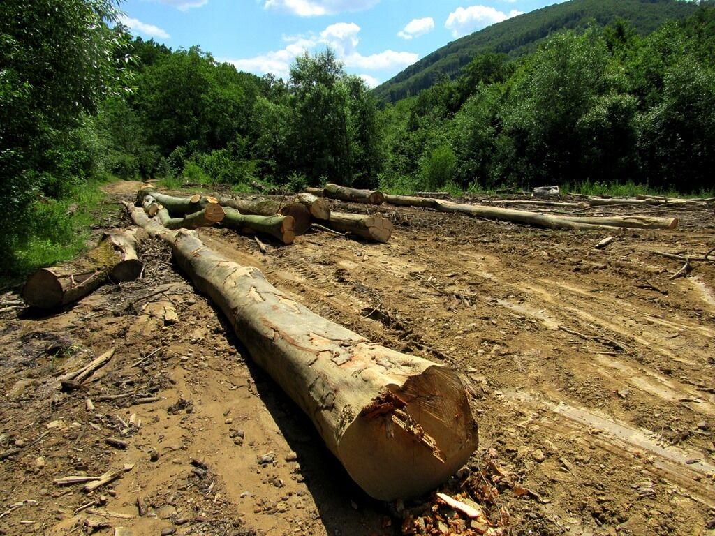 Революционное решение: в Украине за вывоз леса будут сажать в тюрьмы