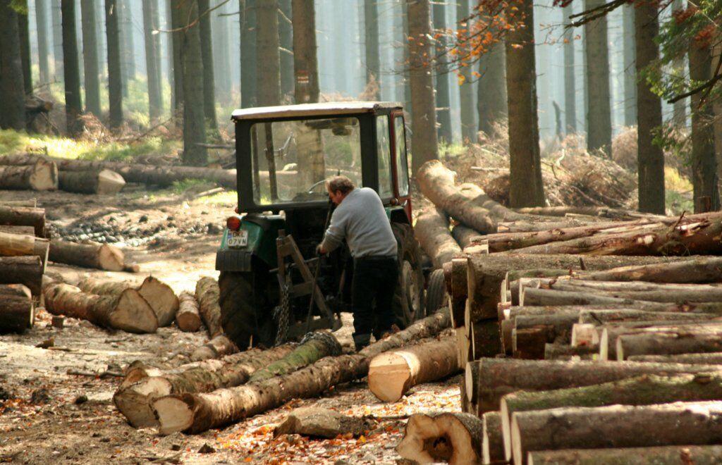 Революційне рішення: в Україні за вивезення лісу саджатимуть до в'язниць
