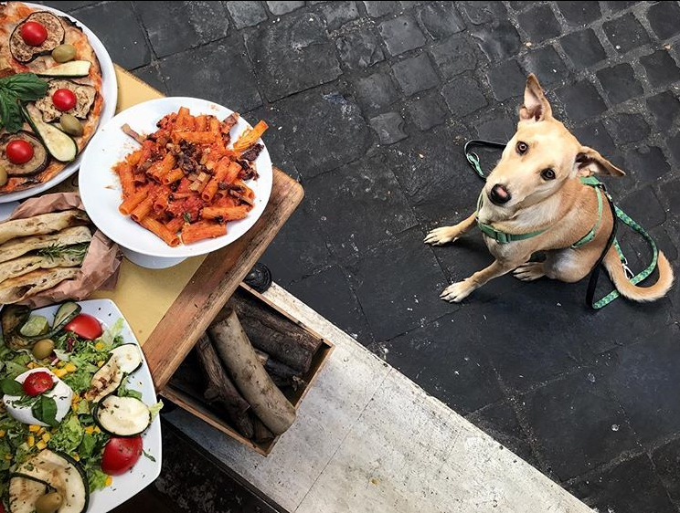 Спасенная украинской парой собака стала звездой Instagram