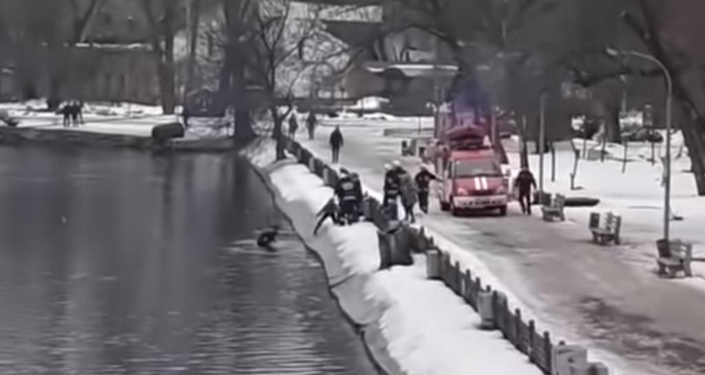 Героический поступок: в Днепре мужчина нырнул в ледяную воду ради дворняжки. Видео photo