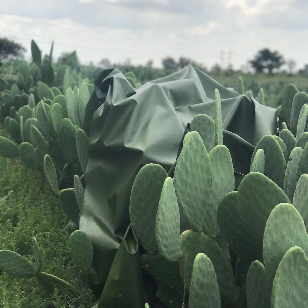 Тканина з кактуса опунції