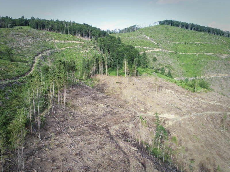 Последствия вырубки лесов в Карпатах