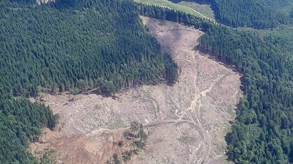 Наслідки вирубки лісів у Карпатах