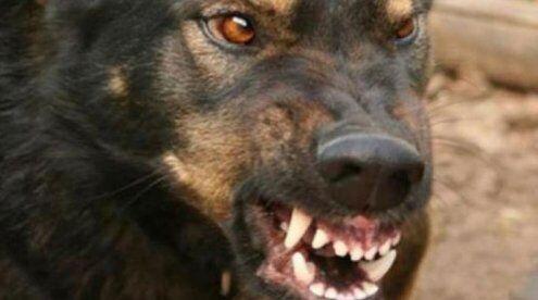 Під Запоріжжям літня жінка померла від укусів пса
