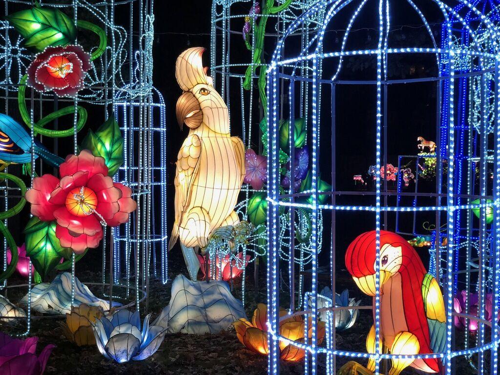 Харьков зажигает огни: что ждет посетителей Фестиваля гигантских китайских фонарей photo