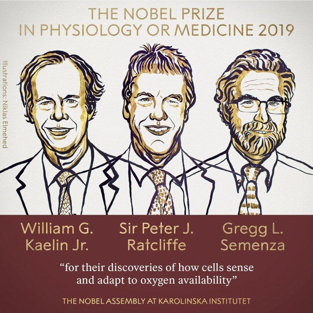 Нобелевская премия по медицине 2019: дыхание на уровне клеток и генов photo