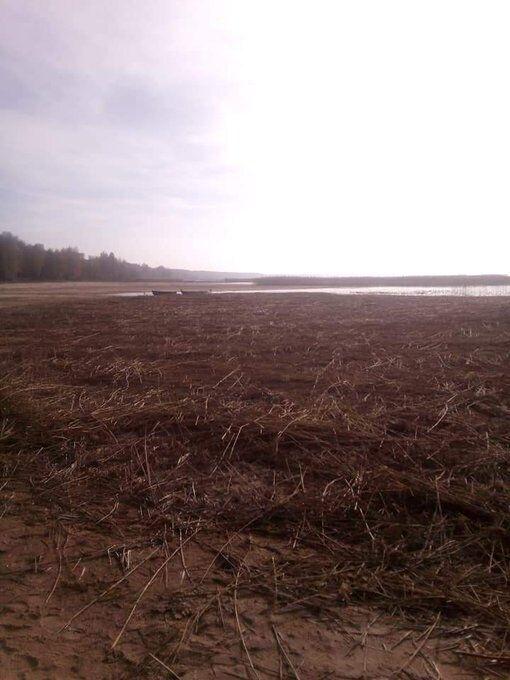 Озеро Світязь обміліло