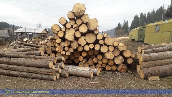 СБУ разоблачила крупную схему экспорта леса