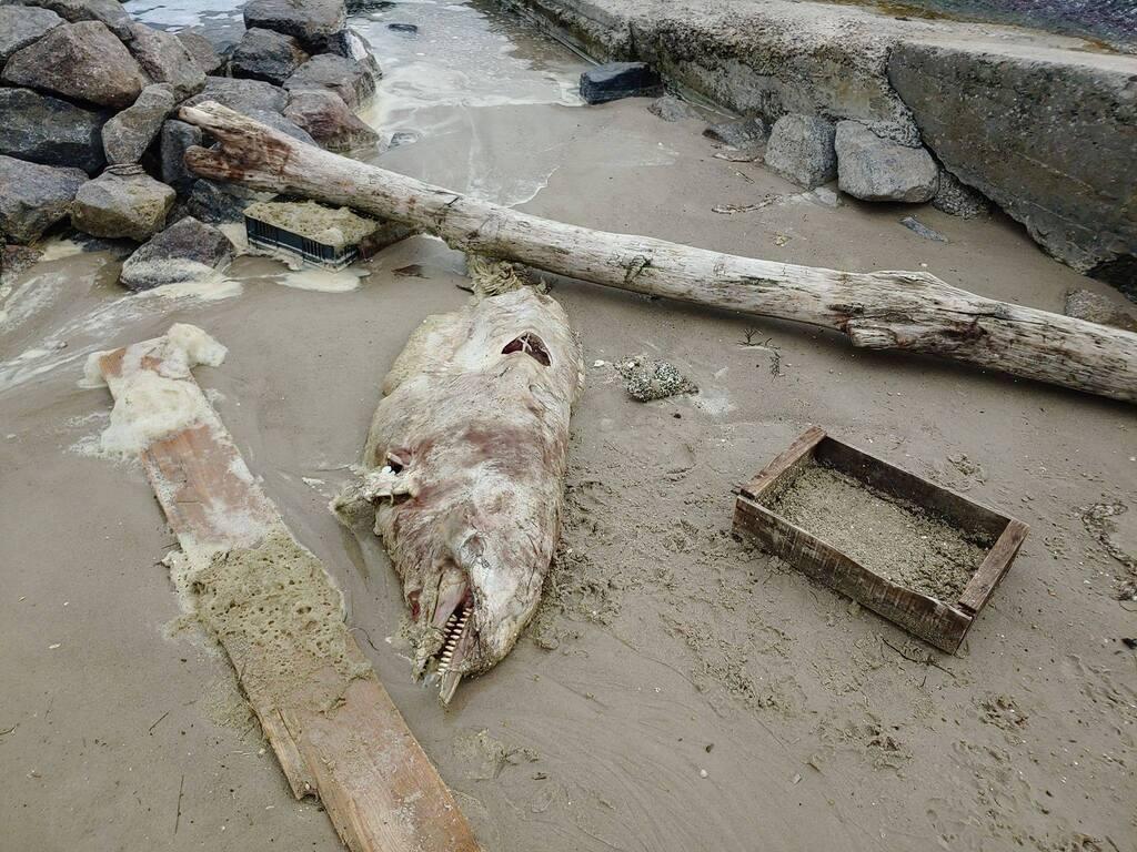 В Одессе на пляж выбросило труп дельфина