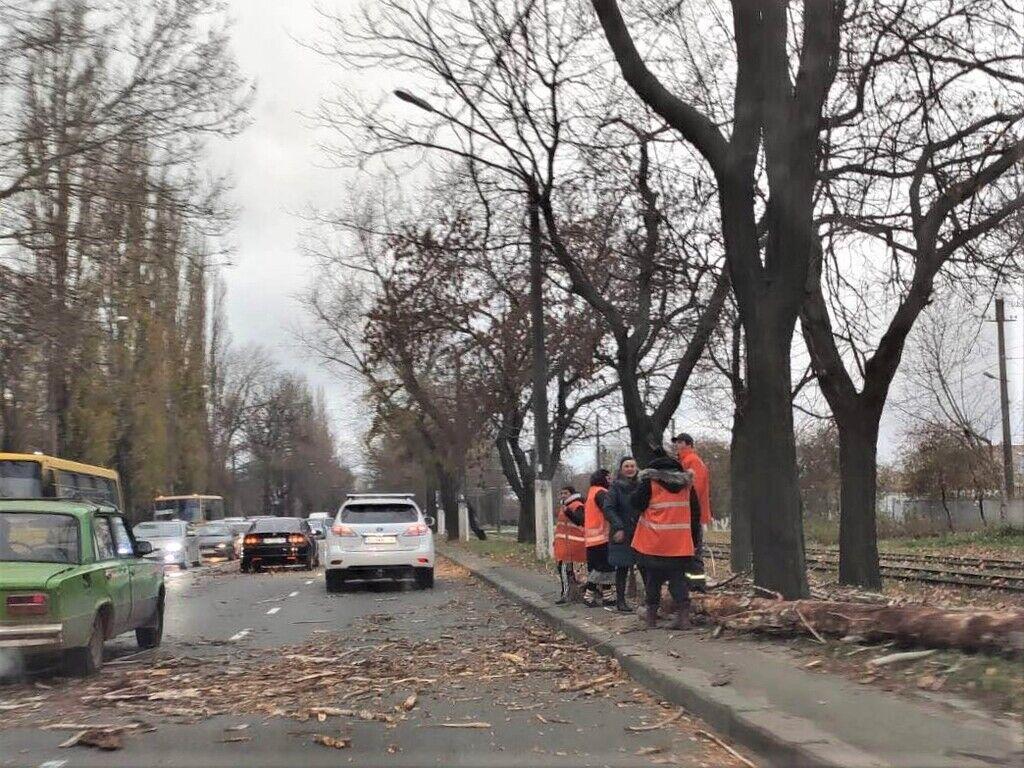 В Одессе штормовой ветер валит деревья