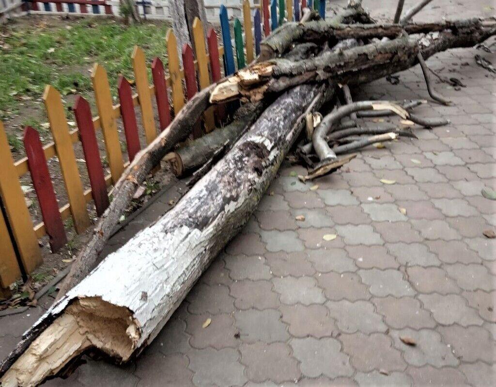 Шторм в Одесі повалив дерева
