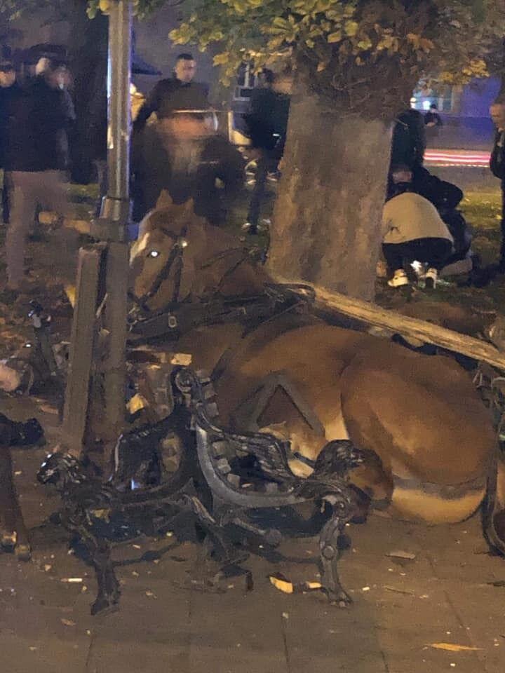 Кінь зніс лавку у Львові