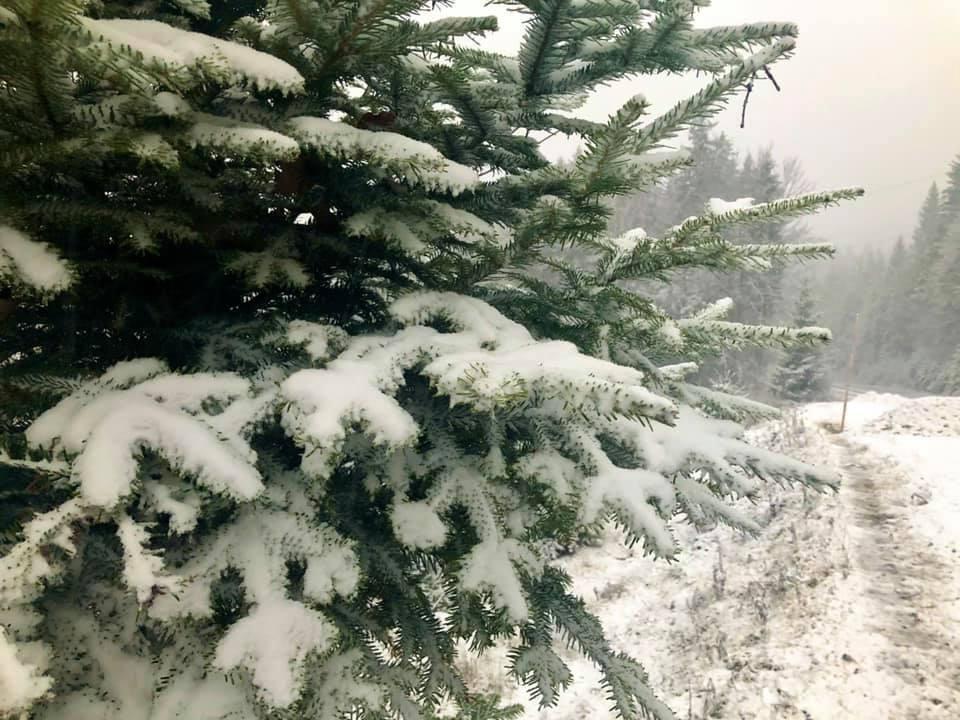 Українські Карпати засипало снігом: неймовірні фото барвистої зими