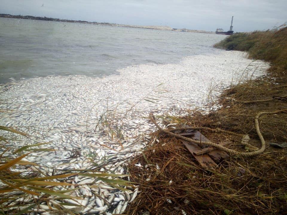 Массовый мор рыбы в Днепре возле Херсонского морского торгового порта