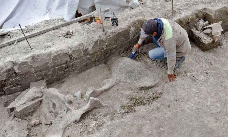 Останки древних животных