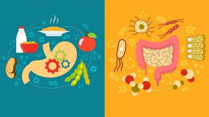 Чим підтримати мікрофлору кишечника?