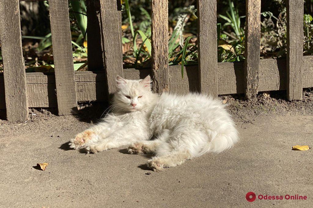 Аномальная жара в декабре в Одессе