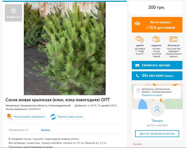 Українцям привозять ялинки з кладовищ: як правильно вибрати і скільки коштують