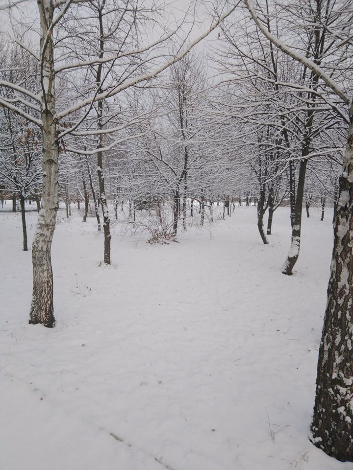 Ліс на півночі Одещини засипало першим снігом
