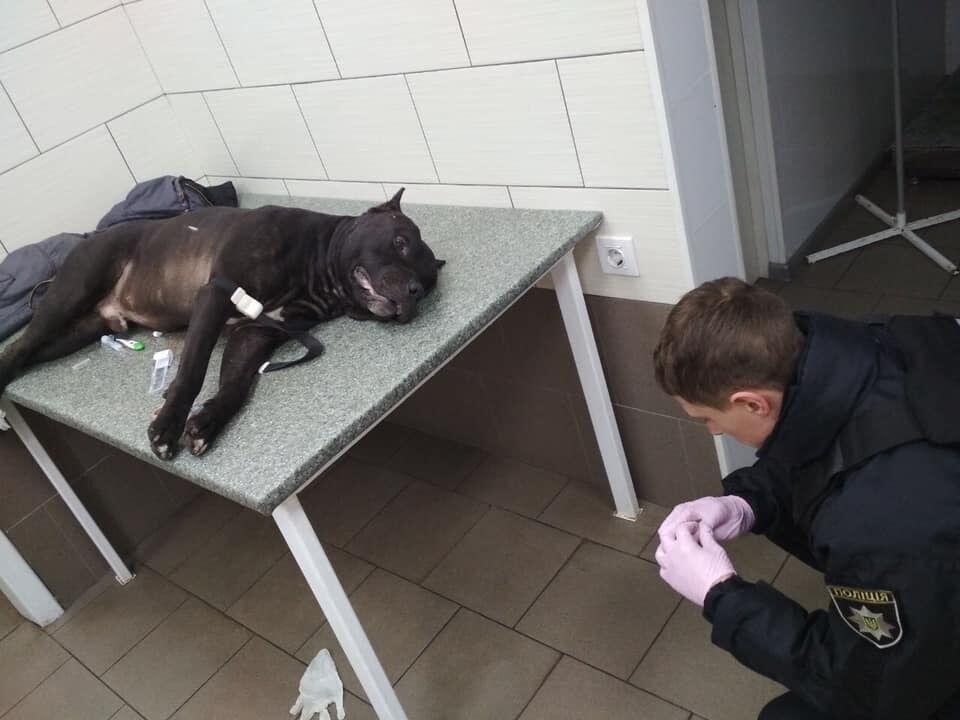 У Києві розгорілася суперечка через застрелену копами собаку