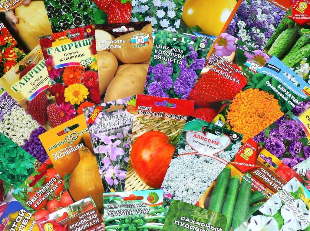 Семена оптом – надежная основа для аграрного бизнеса