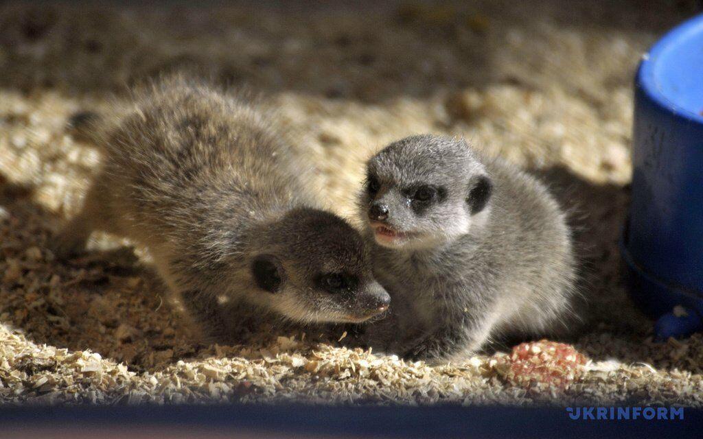 В украинском зоопарке родились экзотические зверьки