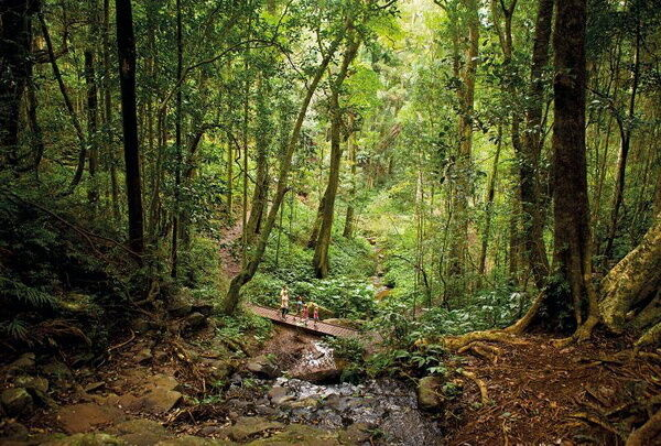 Ліси Австралії