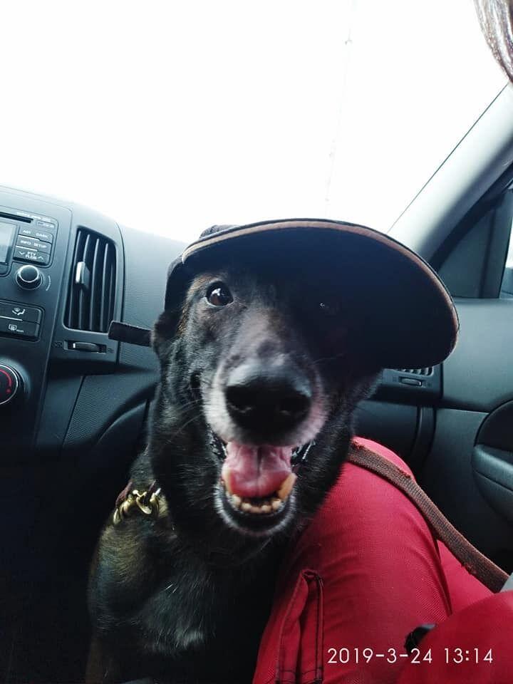 Женщину обнаружила собака по кличке Спарки