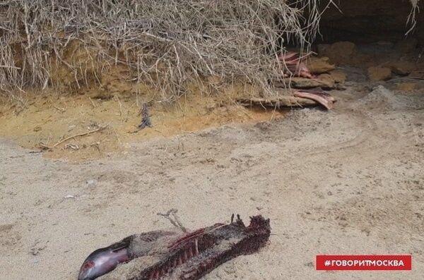 Пляж усеян потрошенными трупами: в Крыму новое ЧП