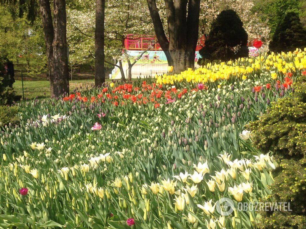 У Києві відкрилася щорічна виставка тюльпанів: яскраві фото
